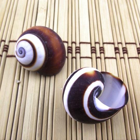 2.5 Cm Small Brown Conch Shells