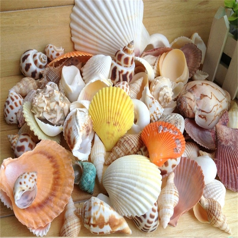 Aquarium Decoration Natural Mix Conch Shells