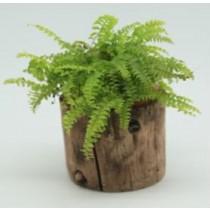 Classic Wood Finish 12 cm Fiberglass Pots