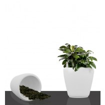 Set of 2 Pcs  White Round Self Watering Planter