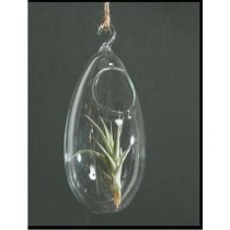 3'' Hanging Egg Shape Borosilicate Glass Vase