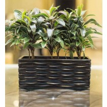 Black Rectangular Shape Ceramic Planter