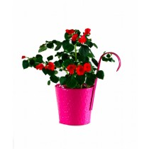 Bright Pink Galvanized Metal Railing Hook Planter
