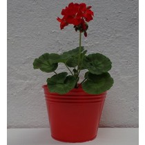 Metal Red Finish 6 Inch Flower Pot