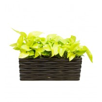 Rectangular Black 12 Inch Metal Planter