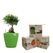 Combo of 3 Green Round Self Watering  Planter