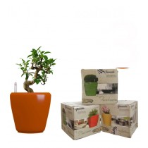 Combo of 3 Orange Round Self Watering Planter