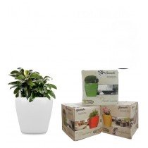 Combo of 3 White Round Self Watering Planter