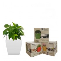 Combo of 3 White Square Self Watering Planter