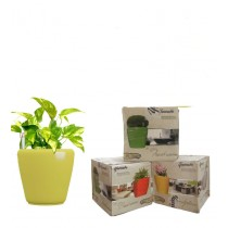Combo of 3 Yellow Round Self Watering Planter