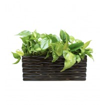 Glossy Look Black Rectangular Planter