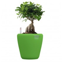 Green Self Watering Plastic planter