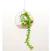 Hanging Glass Ball  Planter- Big