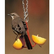 Hanging Oriole Fruit Bird Feeder