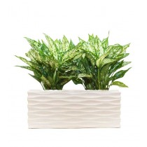 Large Glossy Look White Rectangular Planter