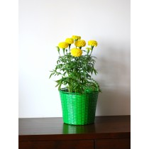 Green Weaved Galvanized Metal Basket Planter
