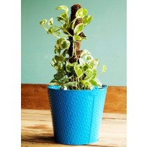 9'' Light Blue Galvanized Metal Planter