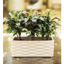 Natural Look White Rectangular Planter