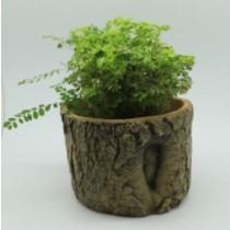 Natural Wood Finish 21 Cm Fiberglass Pots