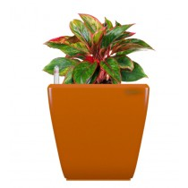 Orange Self Watering Plastic planter
