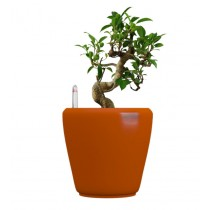 Orange Square Self Watering Plastic planter