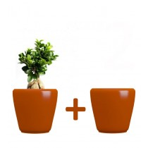 Pack of 2 Cylindrical Shape Orange Planter