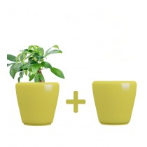 Pack of 2 Cylindrical Round Yellow Planter