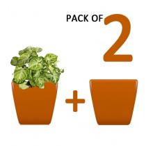 Pack of 2 Cylindrical Square Orange Planter