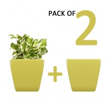 Pack of 2 Cylindrical Square Yellow Planter