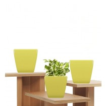 Pack of 3 Cylindrical Square Yellow  Planter