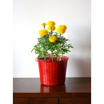 Red Weaved Basket Galvanized Metal Planter