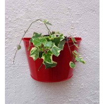 Red  Round Wall Planter