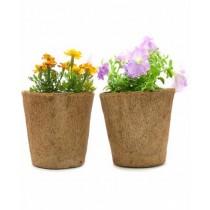Set Of 2 Natural Brown 8'' Coir Pots