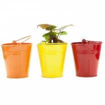 Set Of 3 Colored Galvanized Metal Bucket Planter