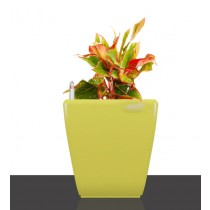 Set of 3 Yellow Square Self Watering Plastic planter