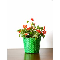 6'' Green Galvanized Basket Metal Planter