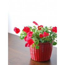 6'' Red Galvanized Basket Metal Planter