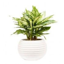 White Circular 6.5 Inch Height Ceramic Planter