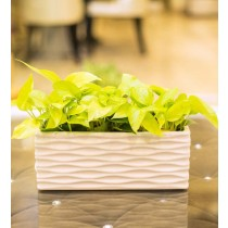 White Rectangular Shape Ceramic Planter