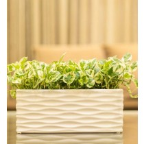 White Rectangular Shape Glossy  Planter