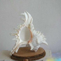 High Quality 12 cm Conch Shell Craft