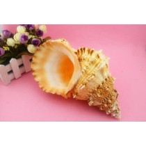Light Yellow Big Coral 28 cm Conch Shell