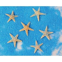 Natural Starfish For Home Decor Set Of 10 Pcs