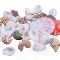 New Aquarium Mixed Sea Shell Crafts
