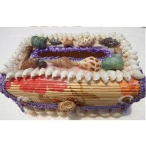 New Arrival Natural Seashell Conch Box
