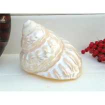 Shiny Seashell Aquarium Ornament Decor