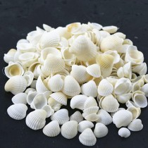 Stylish Natural White Seashell Aquarium Crafts
